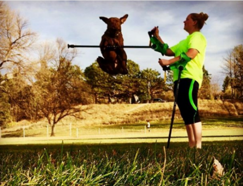 eNews#4 Janaye trains Service Dog Colt to retrieve her smartCRUTCH